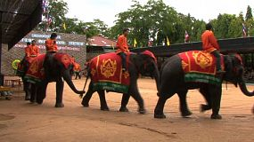 Noble Thai elephants join tails to walk in circles for the excited crowd at a cultural elephant show in Pattaya, Thailand.