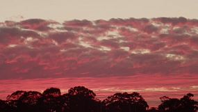 Timelapse of the fading colours and light on clouds in the sunset sky above silhouetted trees on the horizon.