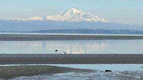 A cute little girl walks on the beach at Boundary Bay with Mount Baker rising in the background.