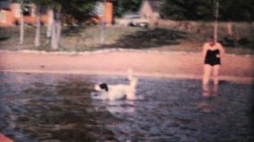 A happy dog enjoys going for a swim in the lake during the summer of 1962.
