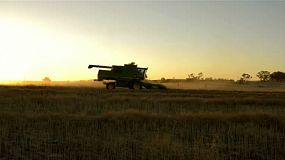 The sun setting on an farmer harvesting a canola crop, that has been swathed into windrows ready for harvest.