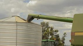 A header auger offloading a load of oats into a field bin on an Australian farm.