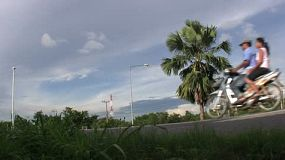A tall palm tree sways in the breeze along a busy highway outside Sattahip, Thailand.