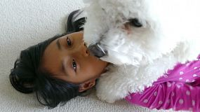 A cute little 9 year old Asian girl spends time hugging and cuddling her new Bichon Frise puppy.