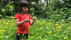 A cute little Asian girl wanders into a sea of yellow flowers in the forest to pick a pretty bouquet.