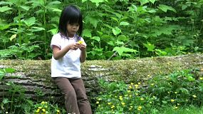 A cute little Asian girl leans against a large log in the forest picking pretty yellow flowers.