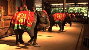 Adorable live elephants dance and swing their trunks during a live performance in a Thai cultural show in Pattaya, Thailand.