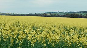 Looking across a flowering canola crop to a valley on a farm in Western Australia.