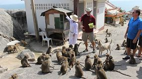 Tourists visit Monkey Mountain in Hua Hin, Thailand to feed the crazy monkeys dried corn and bananas.
