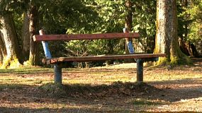 An old park bench sits lonely and forgotten as the wind whips through the forest. (HD 1080p30)