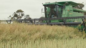 A combine harvester passing by the camera while swathing a crop of canola on a Western Australian farm.