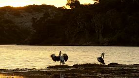 Pelicans on a small island on the Moore River, near Guilderton, Western Australia, with the sun setting in the background.
