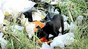 A stray puppy forages for food in a pile of garbage, in Bangkok, Thailand.