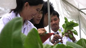A group of young Asian technicians examine plants in a green house to ensure proper growth is happening.