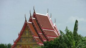 A shot of a Buddhist temple roof top peaking over palm trees in rural Thailand.