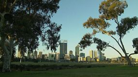 View of the Perth City skyline from across the Swan River, framed by eucalyptus trees and grass.