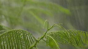 Heavy tropical rain falling on leaves, as they sway in the wind.