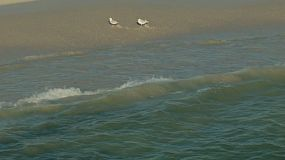 Two seagulls walking near the lapping waves of the ocean at a beach in Perth, Australia.