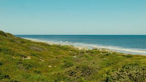 View across a dune covered with bushes and plants, to the clear waters and horizon of the ocean.