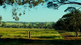 Looking down a hill, through a gate and across a cropped paddock on a farm.