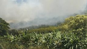 A wildfire moving across a swamp area in Thailand.