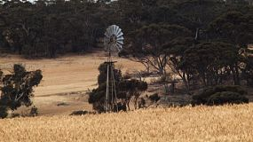 Windmill in a field of golden wheat on an Australian farm, with trees in the background.
