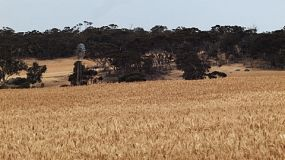 Windmill in a wheat crop on an Australian farm.