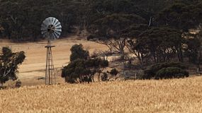 Windmill in a field of golden wheat on an Australian farm.