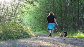 A woman walks her two Daschund puppies down a pretty forest path in the summer of 2015.