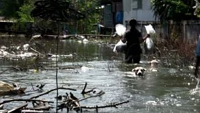 Dogs And Thai People Wading Through Flood Waters