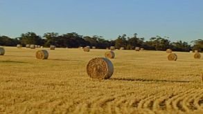 Freshly Harvested Paddock Of Hay Bales